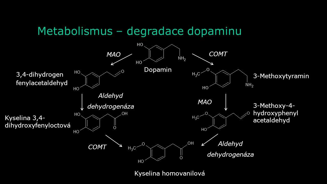 Metabolismus – degradace dopaminu