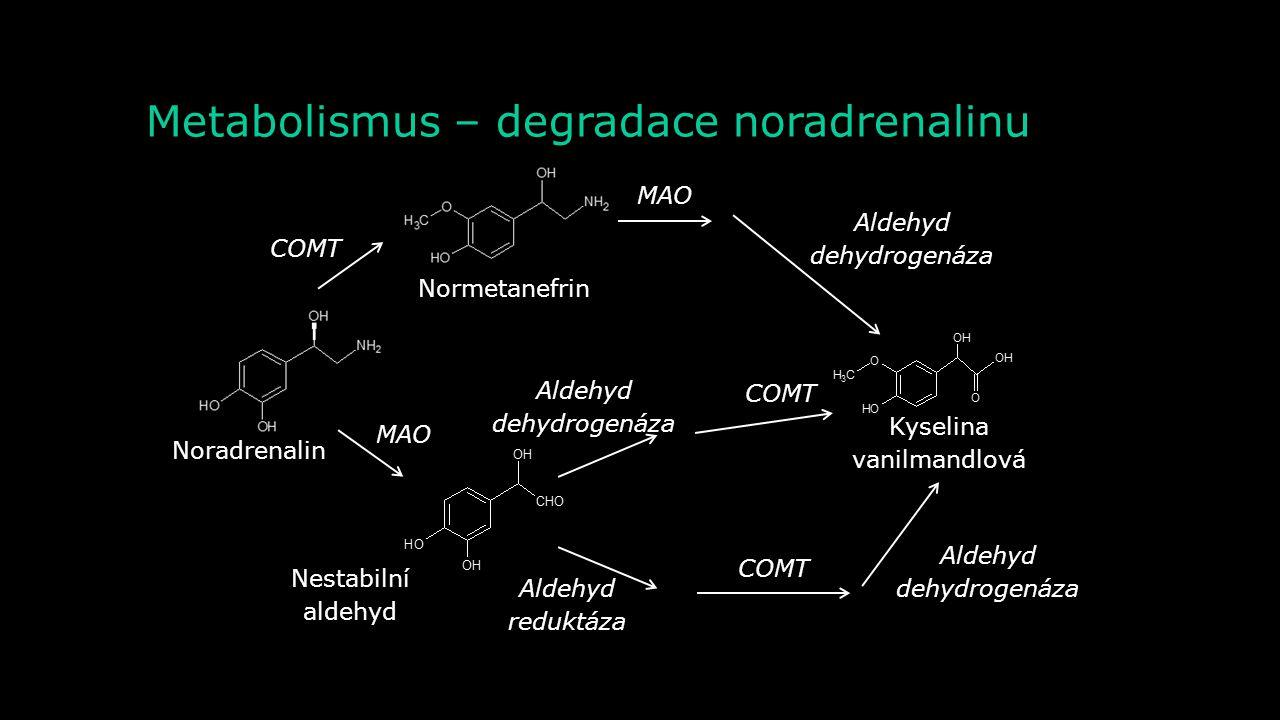 Metabolismus – degradace noradrenalinu