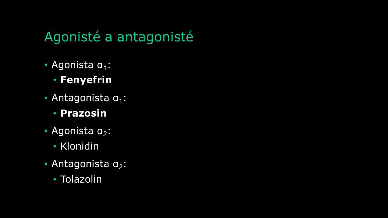 Agonisté a antagonisté