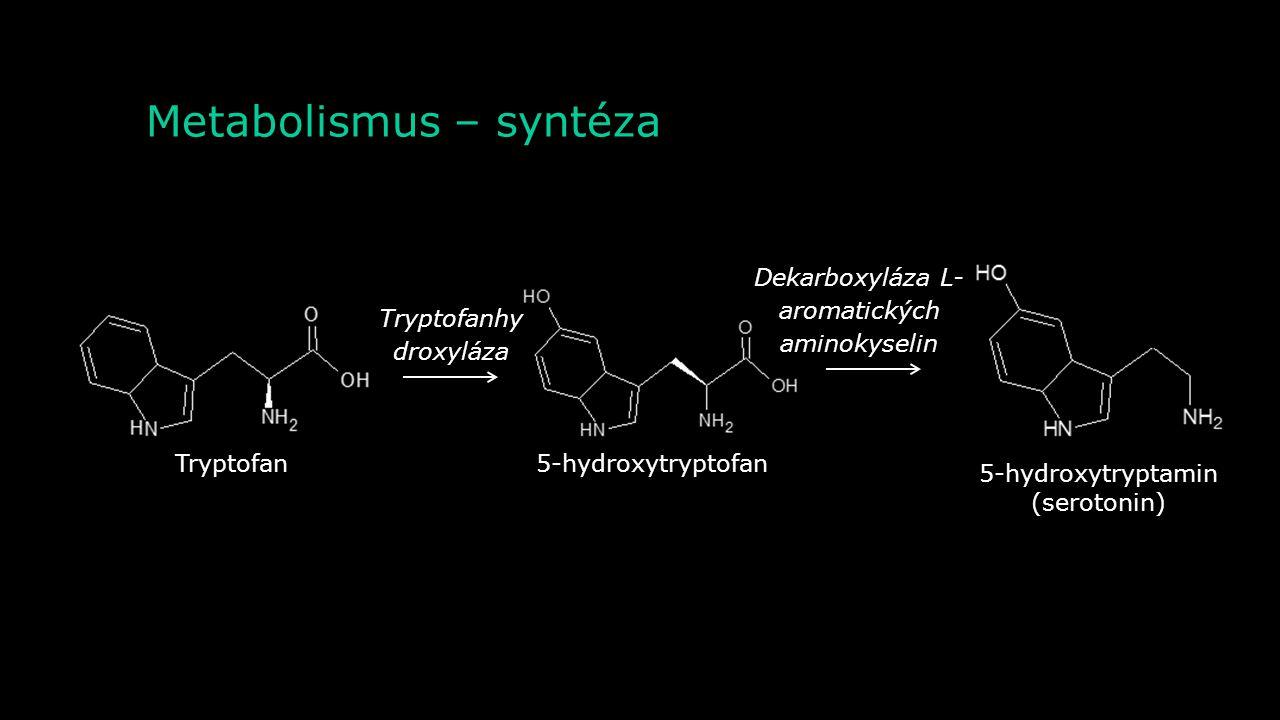 Metabolismus – syntéza
