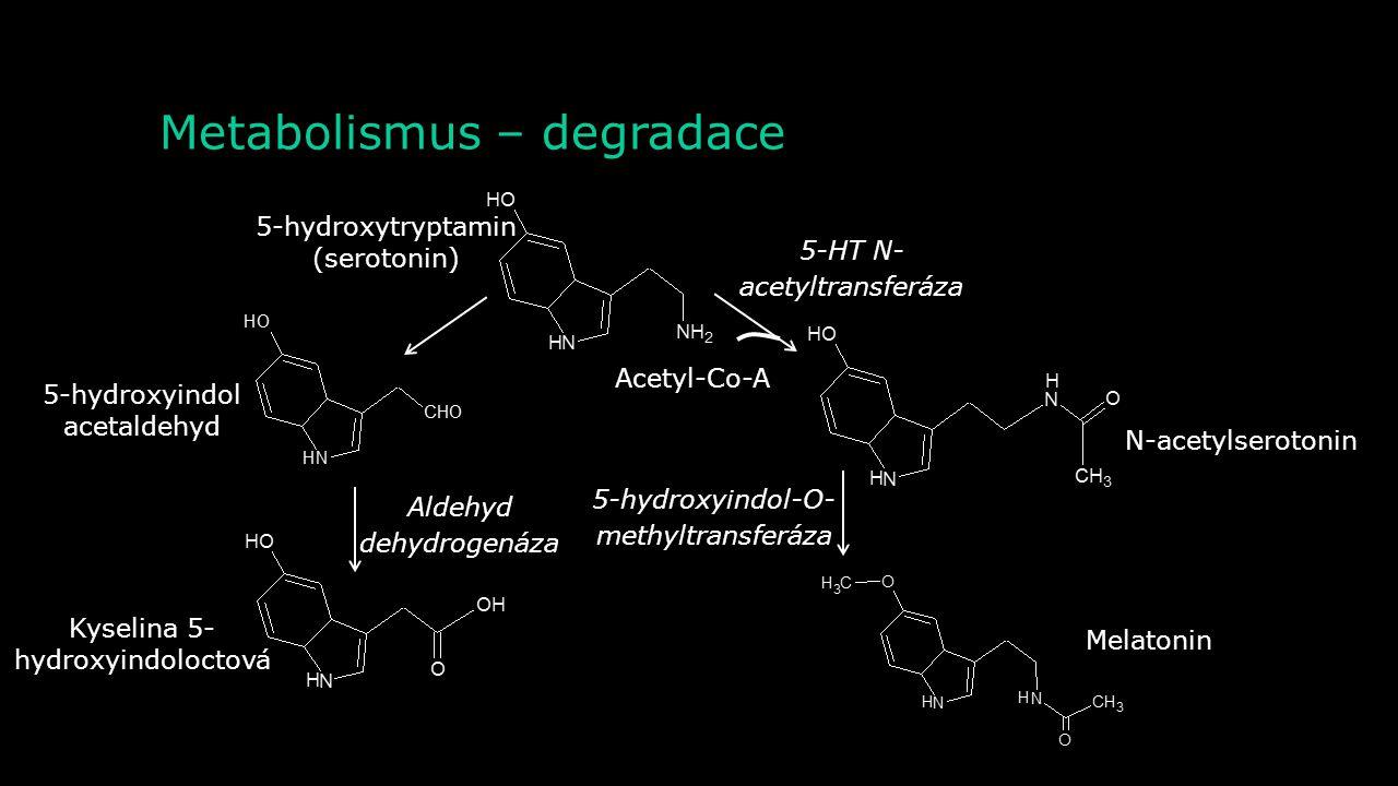 Metabolismus – degradace