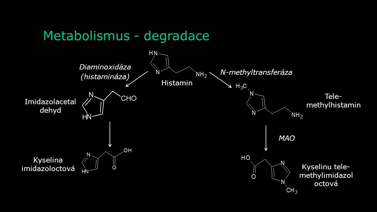 Metabolismus - degradace