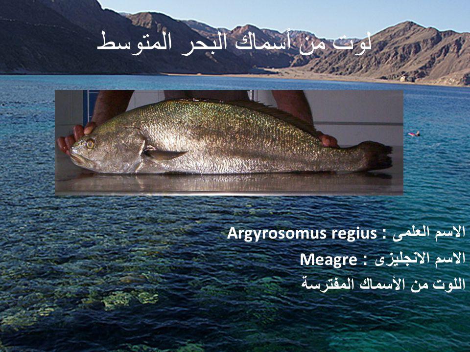 لوت من أسماك البحر المتوسط