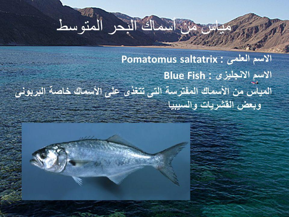 مياس من أسماك البحر المتوسط