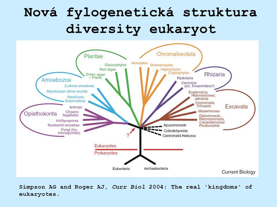 Nová fylogenetická struktura diversity eukaryot