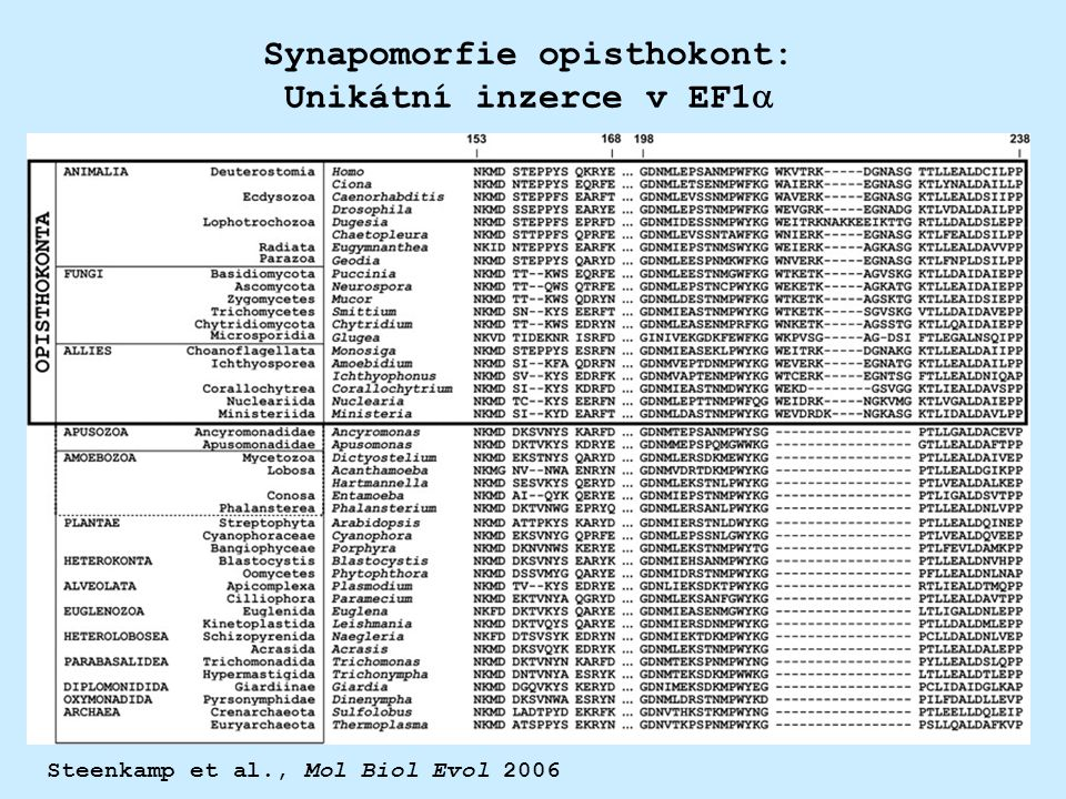 Synapomorfie opisthokont: Unikátní inzerce v EF1a