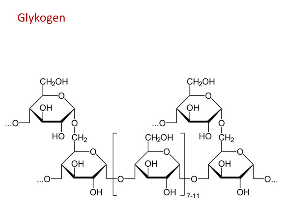 Glykogen