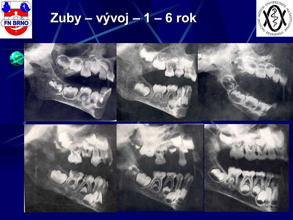 Zuby – vývoj – 1 – 6 rok