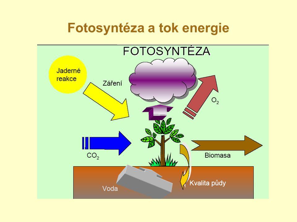 Fotosyntéza a tok energie