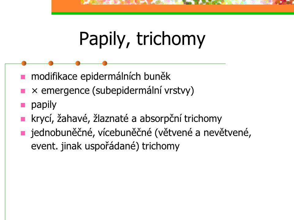 Papily, trichomy modifikace epidermálních buněk