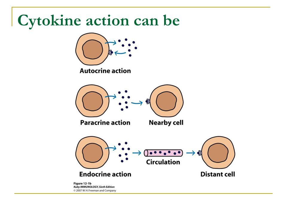 Cytokine action can be