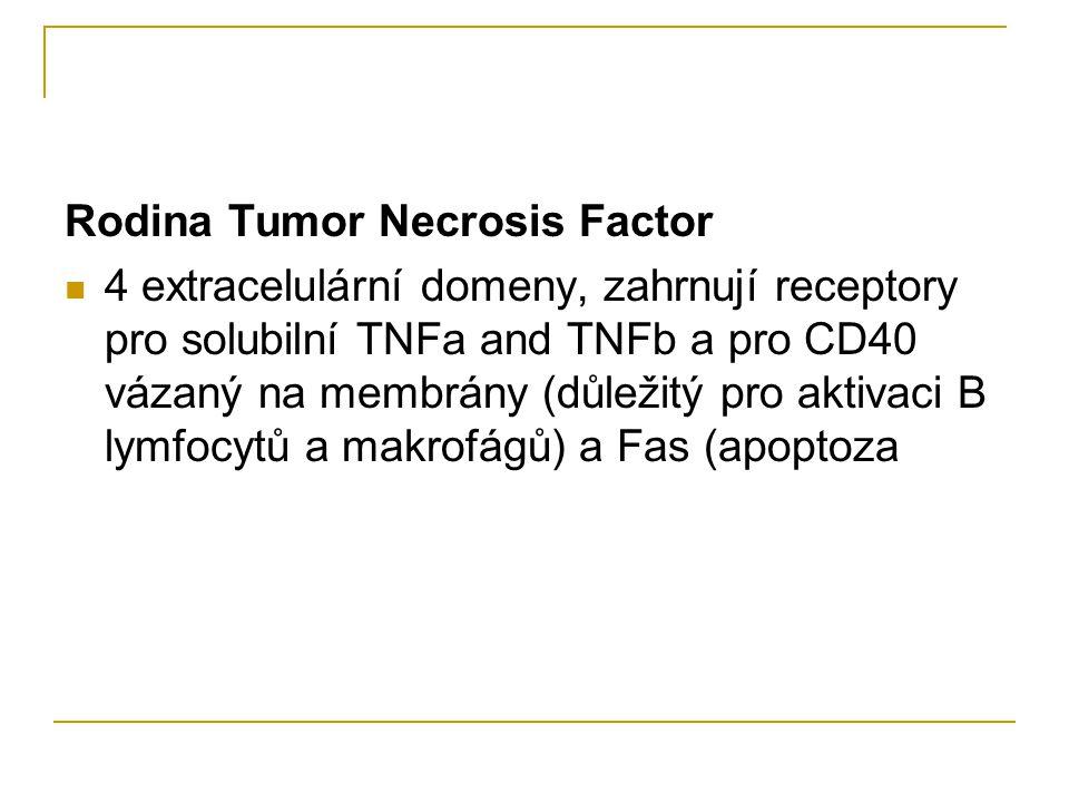 Rodina Tumor Necrosis Factor