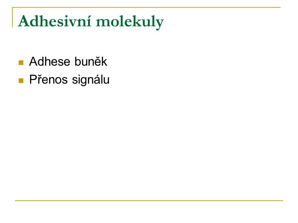Adhesivní molekuly Adhese buněk Přenos signálu