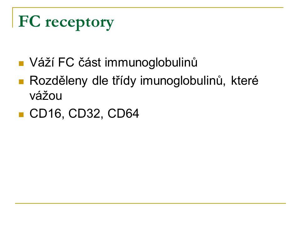 FC receptory Váží FC část immunoglobulinů