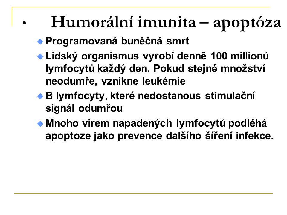 Humorální imunita – apoptóza