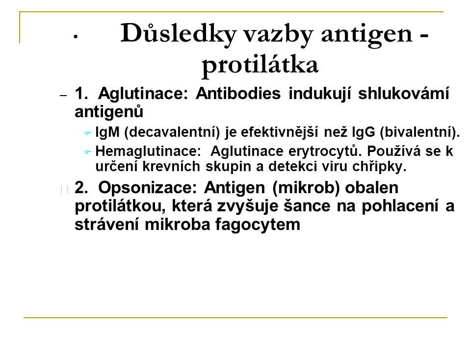 Důsledky vazby antigen - protilátka