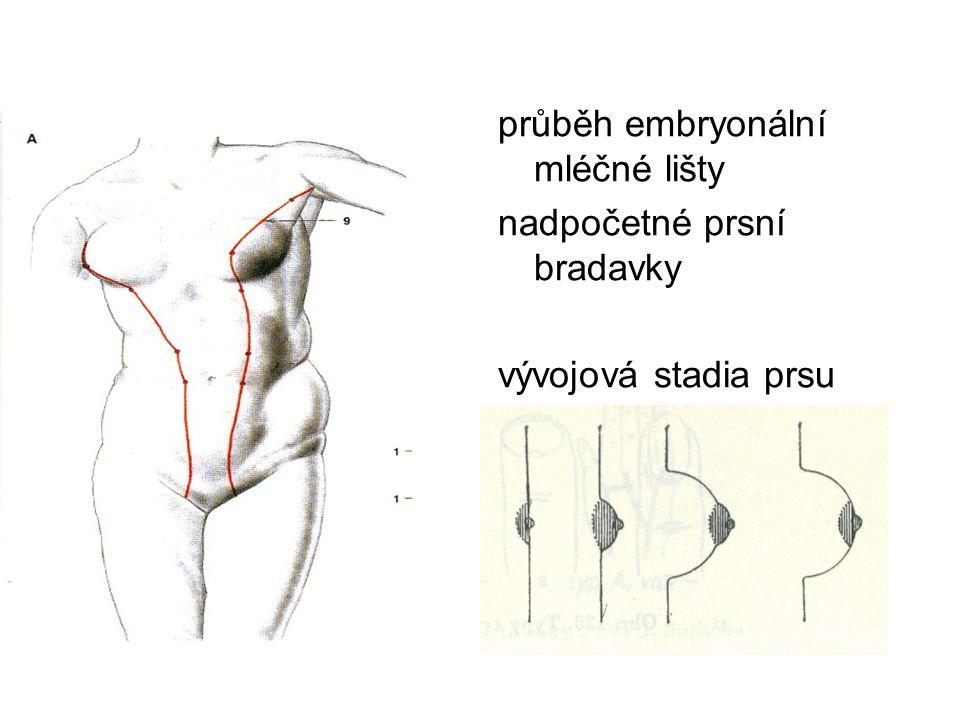 průběh embryonální mléčné lišty