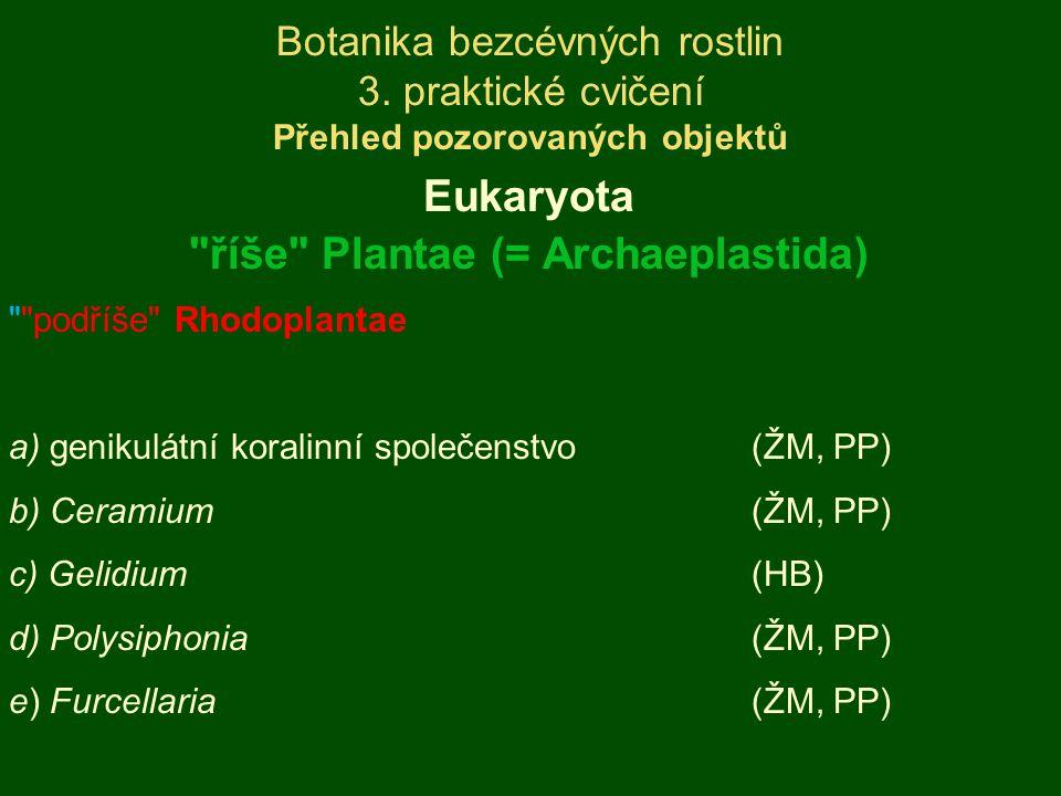 říše Plantae (= Archaeplastida)
