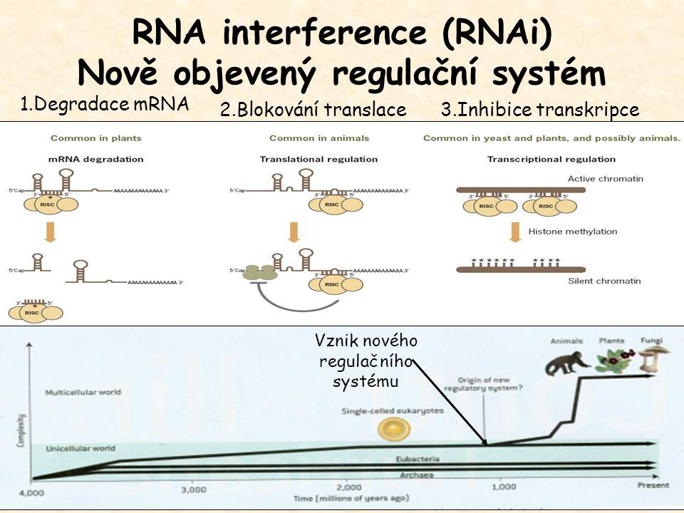 RNA interference (RNAi) Nově objevený regulační systém