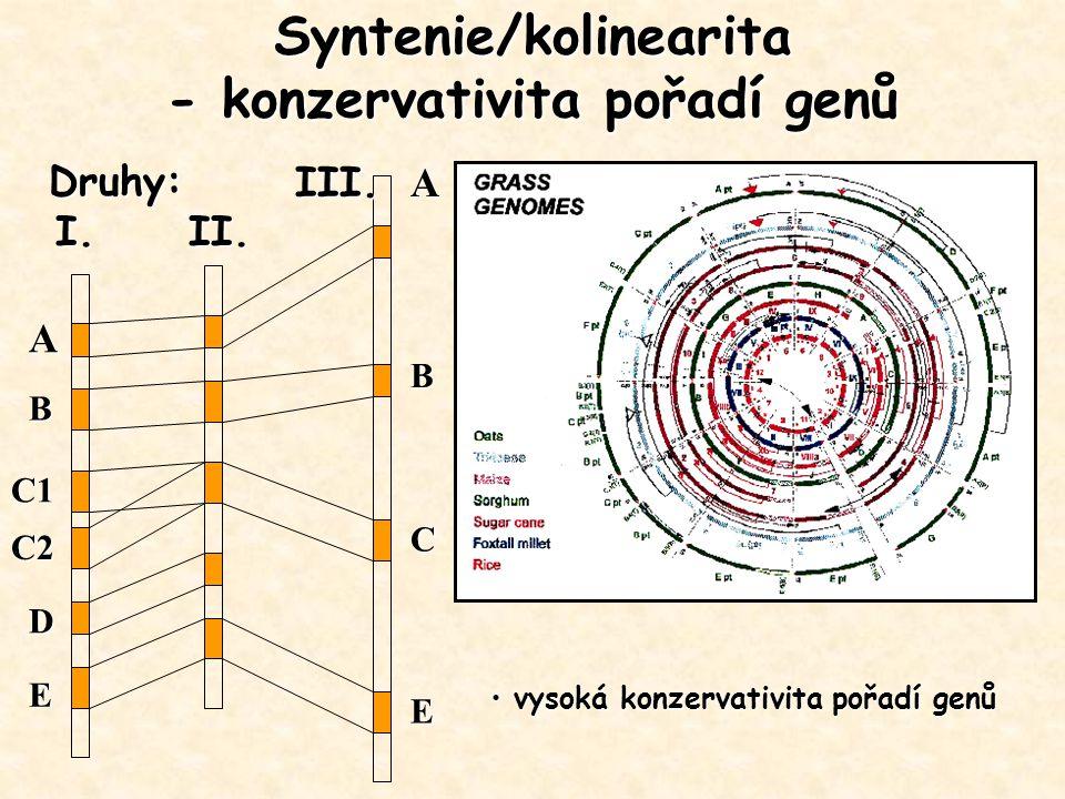 Syntenie/kolinearita - konzervativita pořadí genů