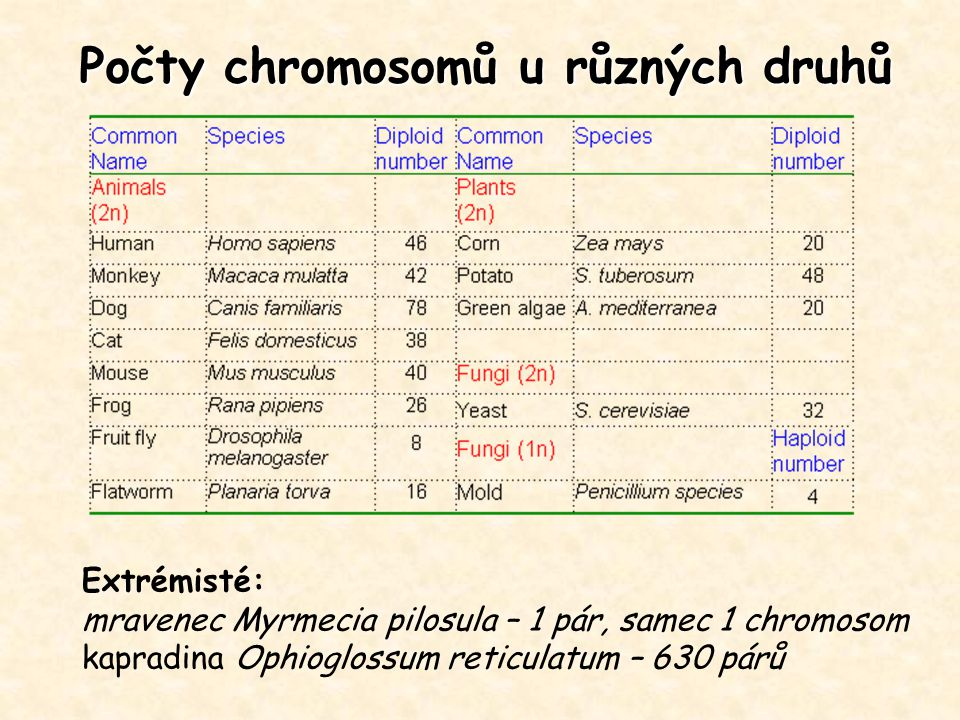 Počty chromosomů u různých druhů