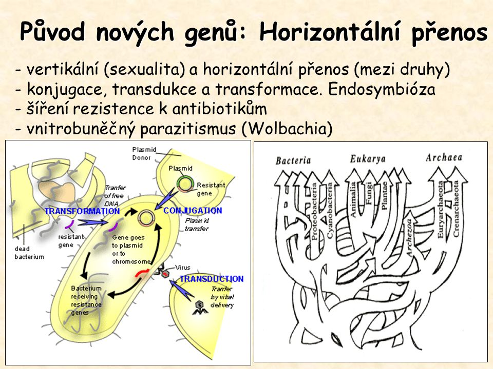 Původ nových genů: Horizontální přenos