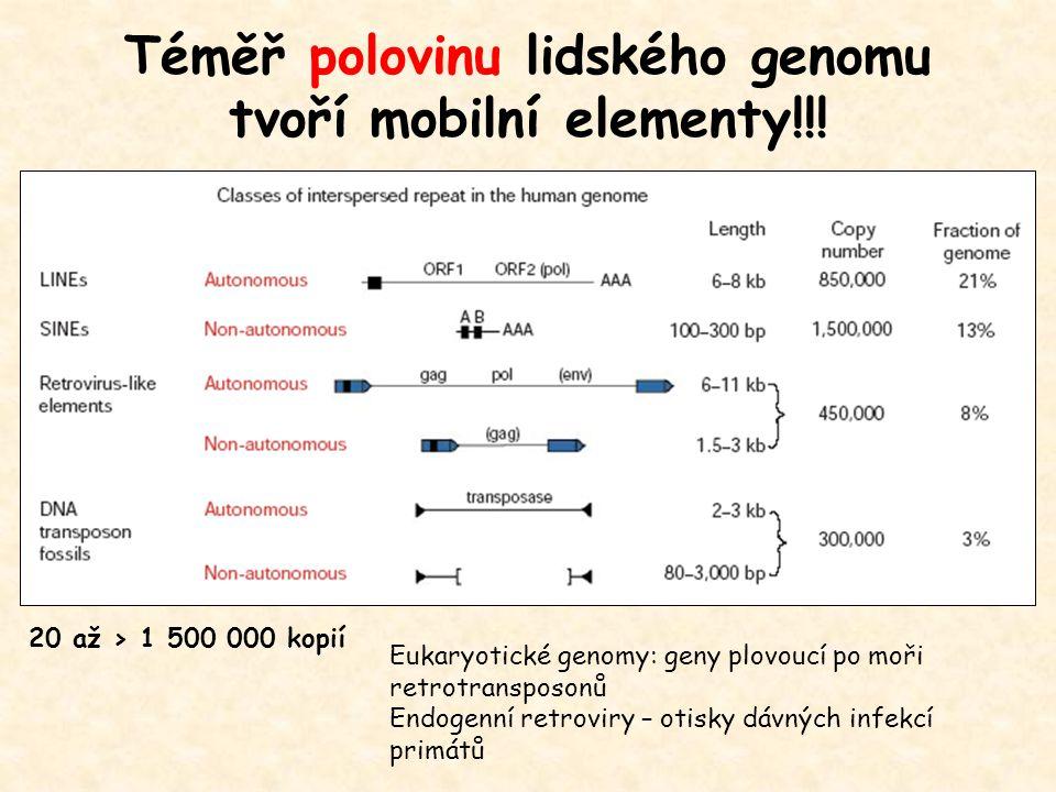 Téměř polovinu lidského genomu tvoří mobilní elementy!!!