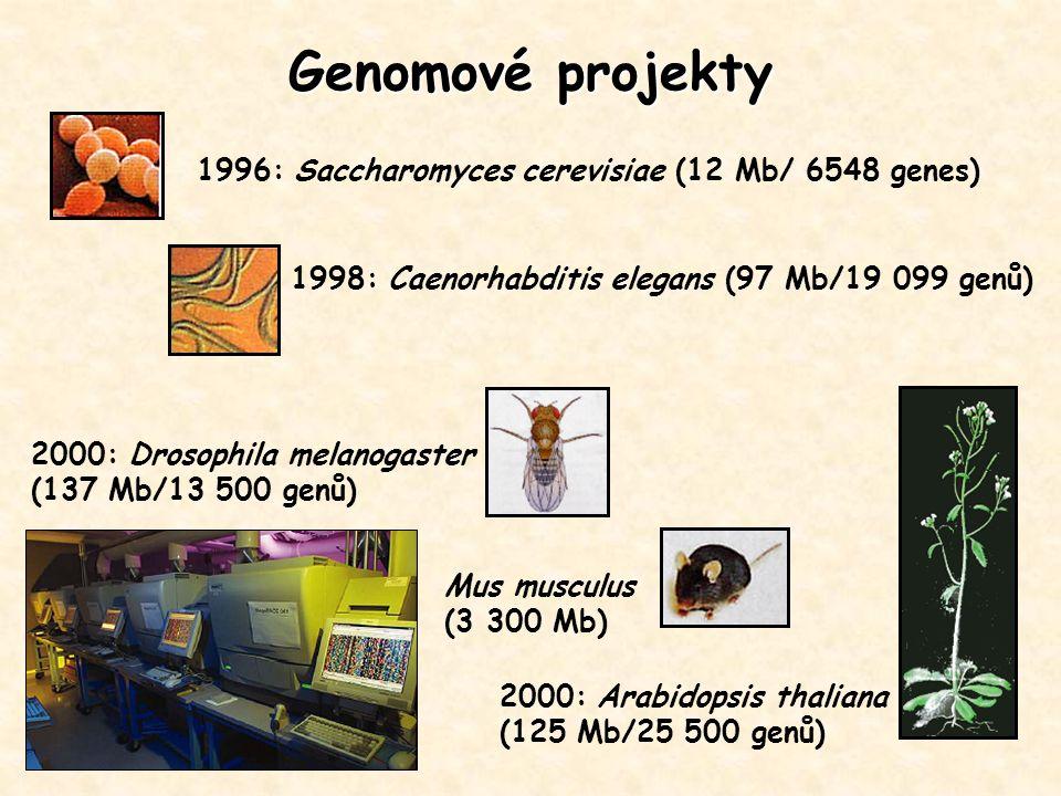 Genomové projekty 1996: Saccharomyces cerevisiae (12 Mb/ 6548 genes)