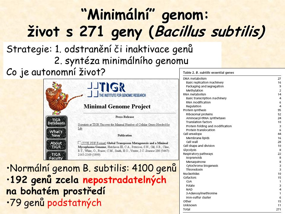 Minimální genom: život s 271 geny (Bacillus subtilis)