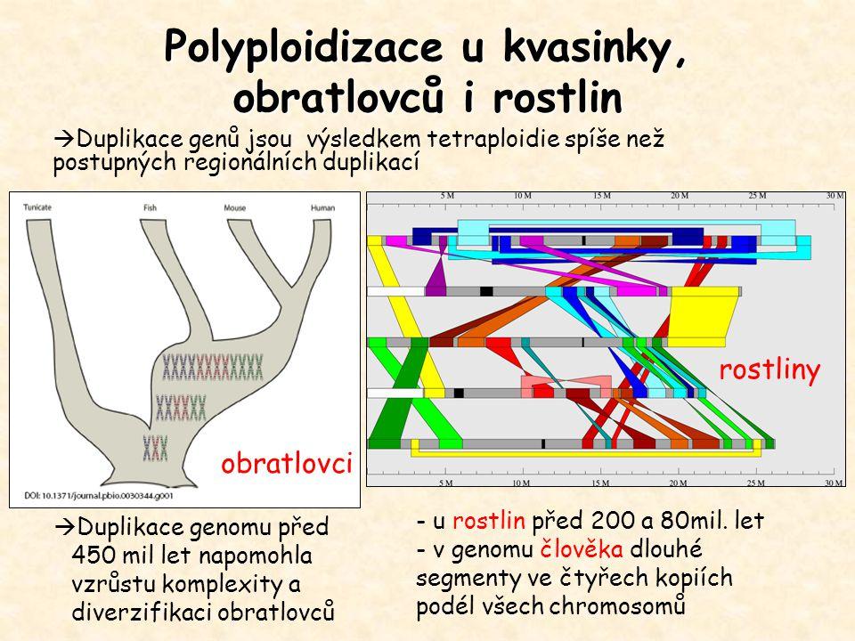 Polyploidizace u kvasinky, obratlovců i rostlin