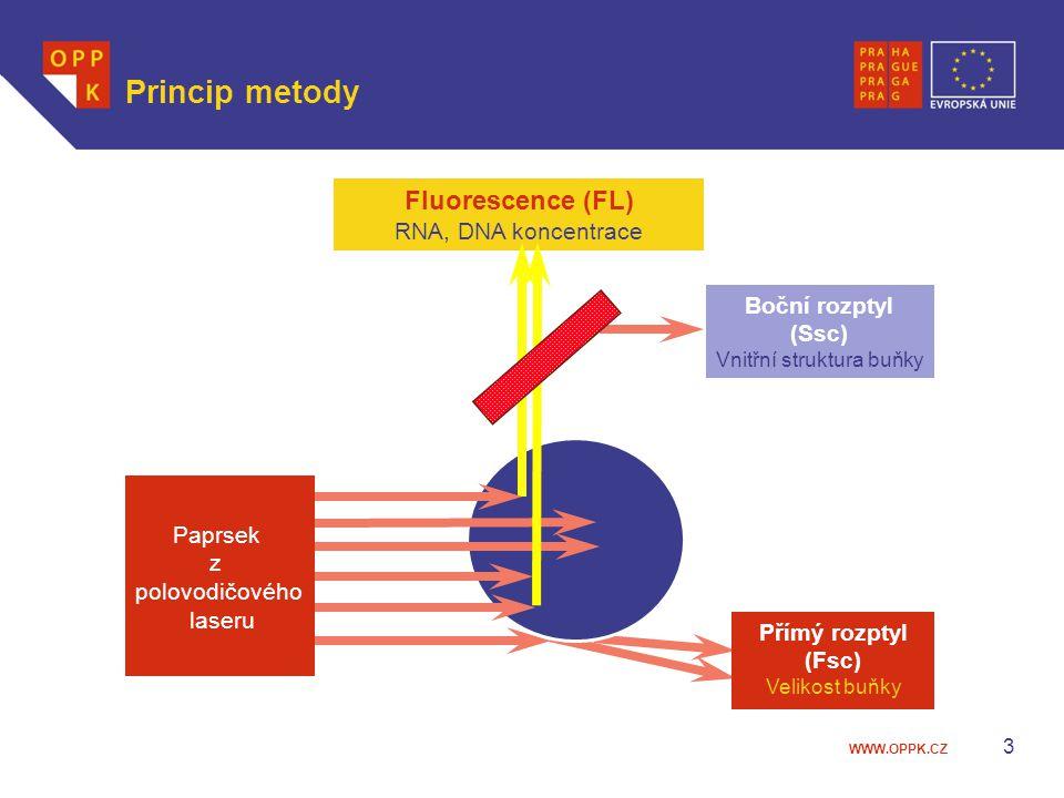 Vnitřní struktura buňky