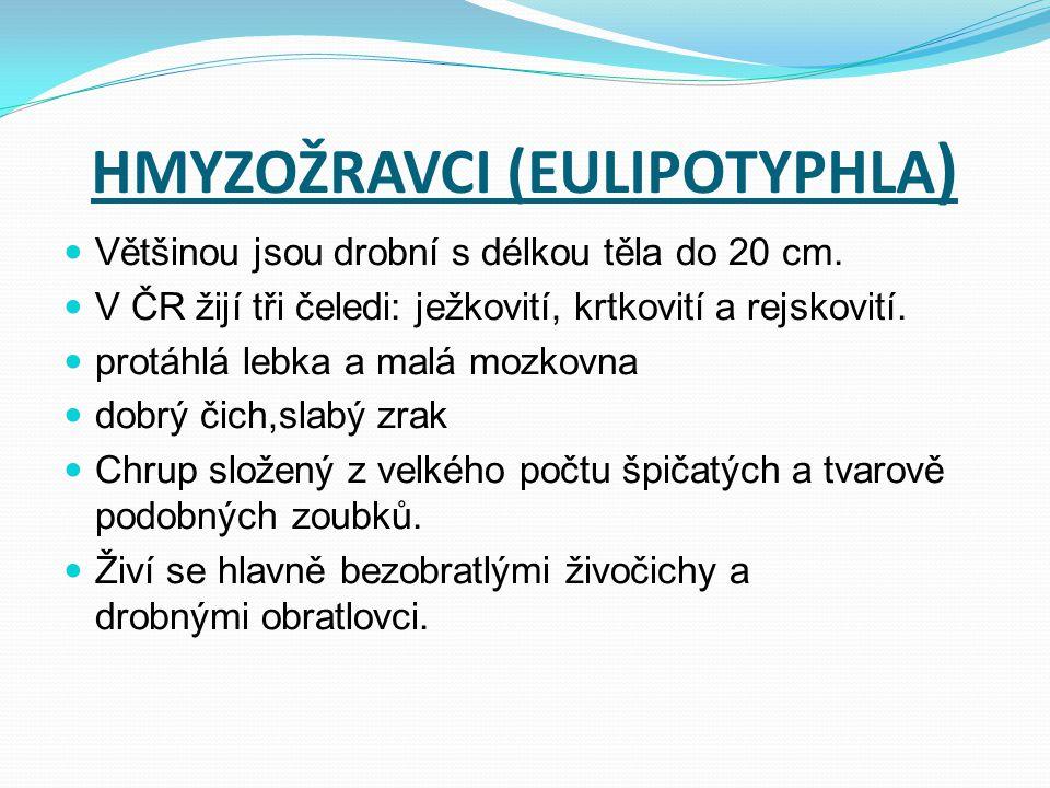 HMYZOŽRAVCI (EULIPOTYPHLA)