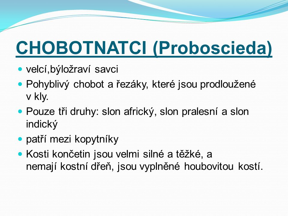 CHOBOTNATCI (Proboscieda)