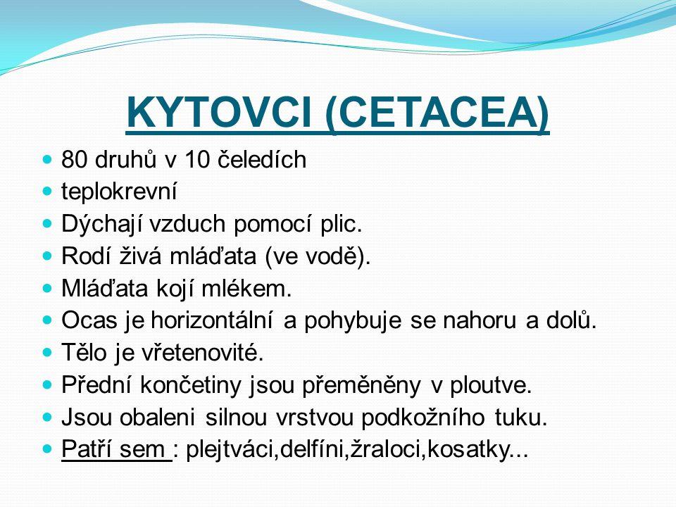 KYTOVCI (CETACEA) 80 druhů v 10 čeledích teplokrevní