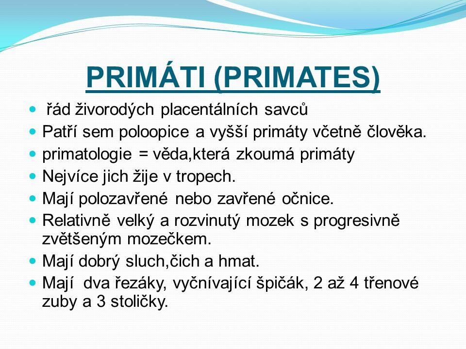 PRIMÁTI (PRIMATES) řád živorodých placentálních savců
