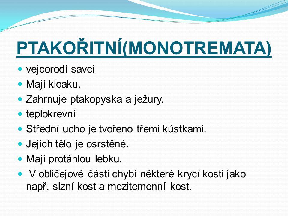 PTAKOŘITNÍ(MONOTREMATA)