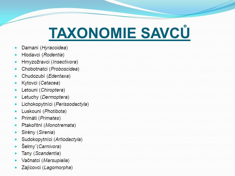 TAXONOMIE SAVCŮ Damani (Hyracoidea) Hlodavci (Rodentia)