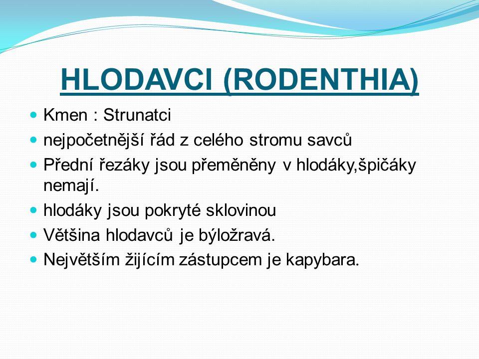 HLODAVCI (RODENTHIA) Kmen : Strunatci