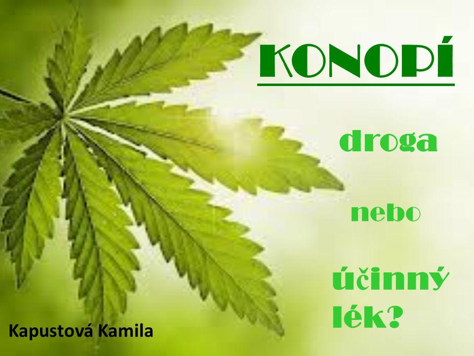 KONOPÍ droga nebo účinný lék Kapustová Kamila