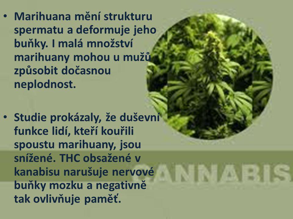 Marihuana mění strukturu spermatu a deformuje jeho buňky