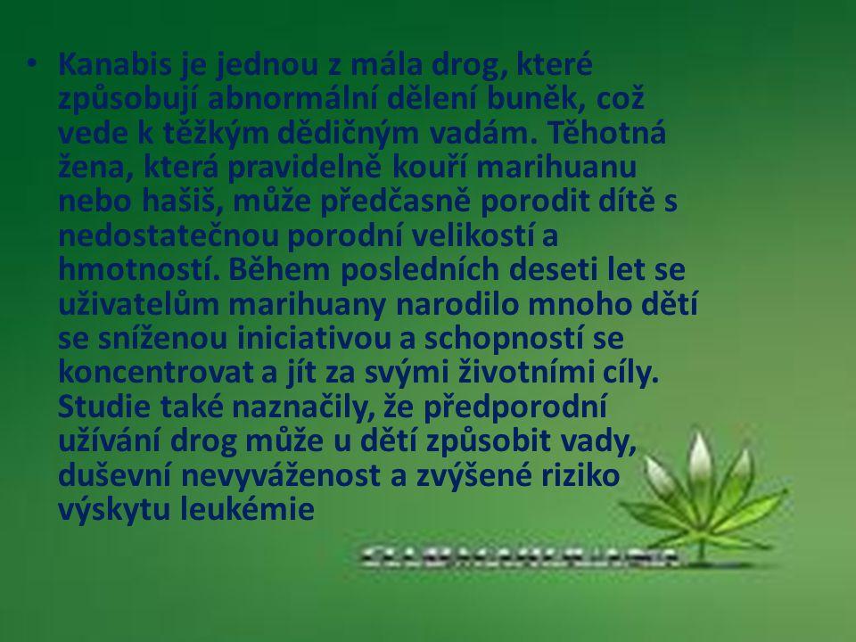 Kanabis je jednou z mála drog, které způsobují abnormální dělení buněk, což vede k těžkým dědičným vadám.
