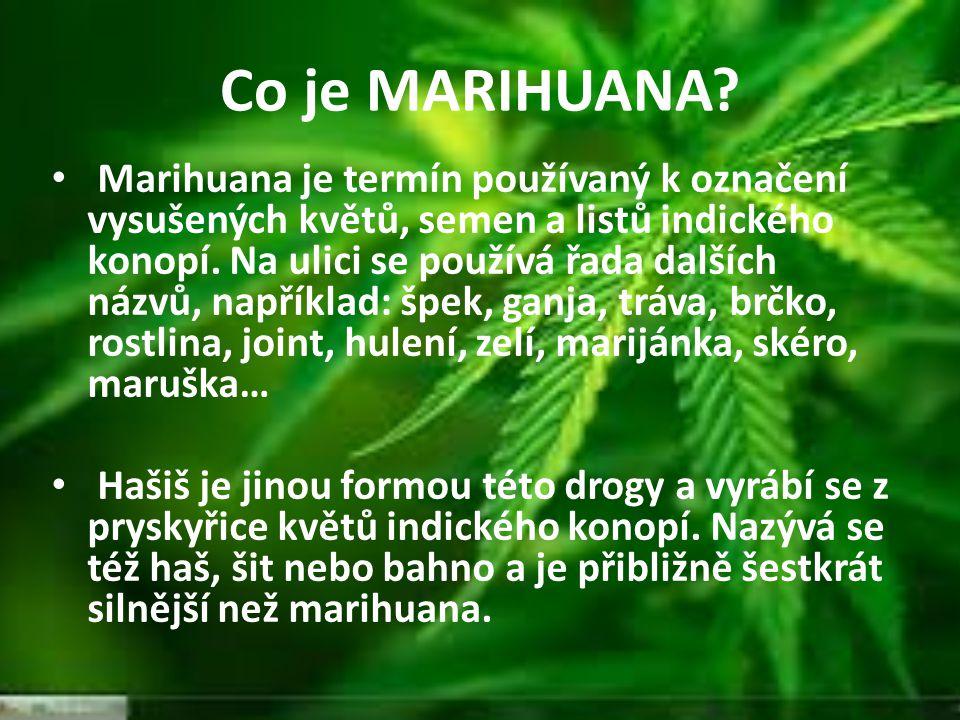 Co je MARIHUANA