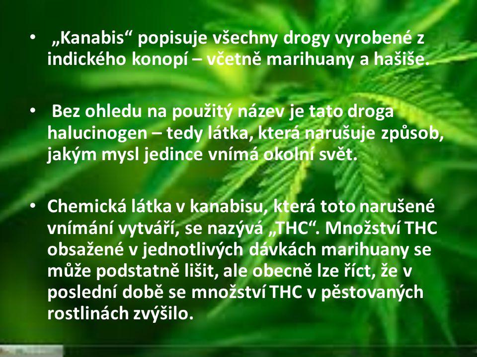 """""""Kanabis popisuje všechny drogy vyrobené z indického konopí – včetně marihuany a hašiše."""
