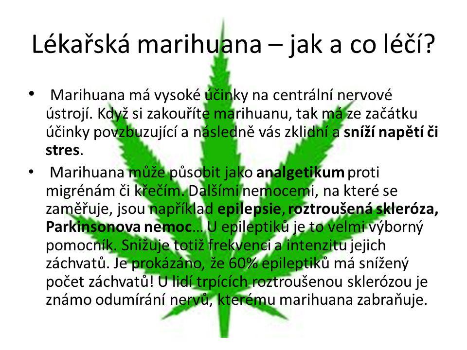 Lékařská marihuana – jak a co léčí