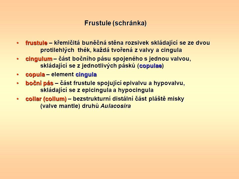 Frustule (schránka) frustule – křemičitá buněčná stěna rozsivek skládající se ze dvou protilehlých thék, každá tvořená z valvy a cingula.