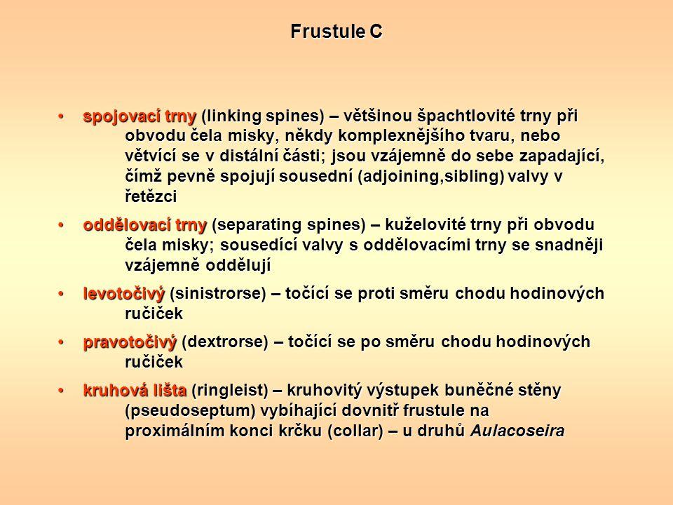 Frustule C
