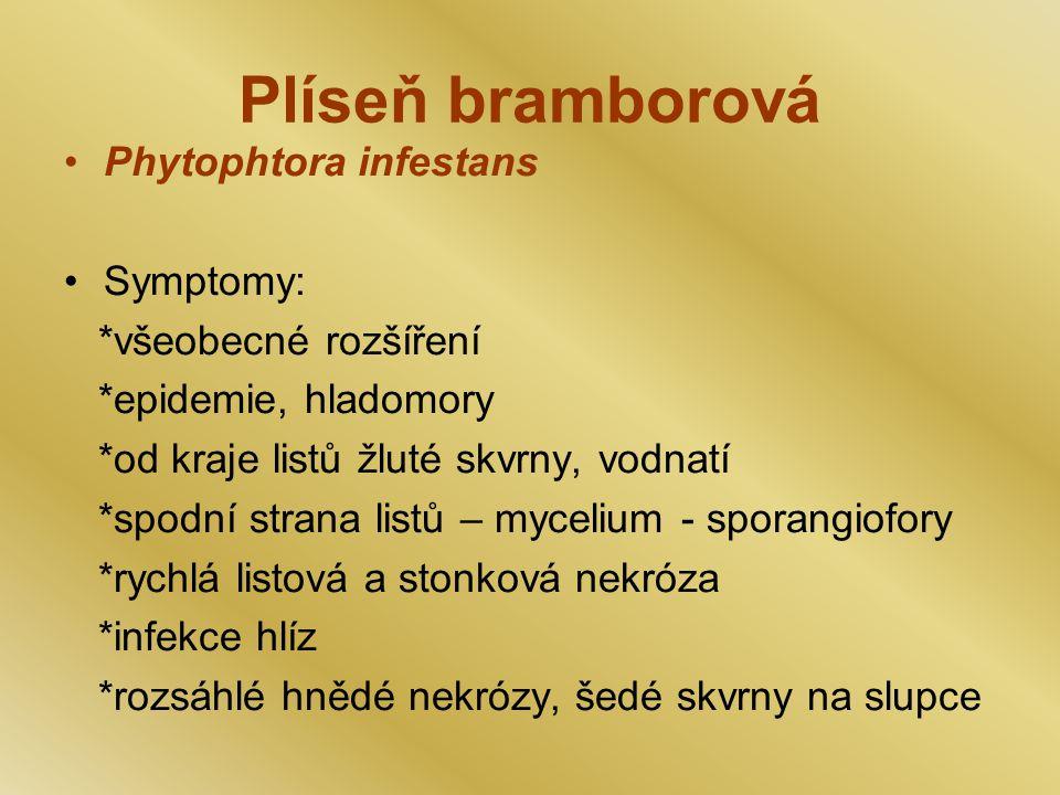 Plíseň bramborová Phytophtora infestans Symptomy: *všeobecné rozšíření