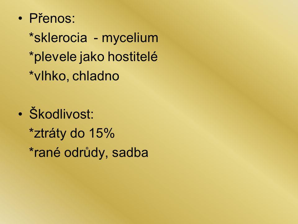 Přenos: *sklerocia - mycelium. *plevele jako hostitelé. *vlhko, chladno. Škodlivost: *ztráty do 15%
