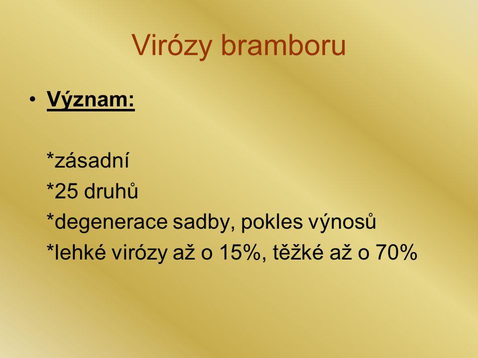 Virózy bramboru Význam: *zásadní *25 druhů
