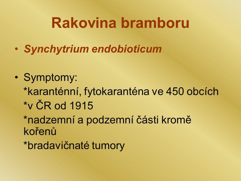 Rakovina bramboru Synchytrium endobioticum Symptomy: